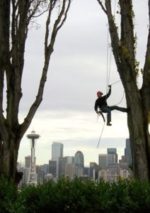 Seattle Tree Care